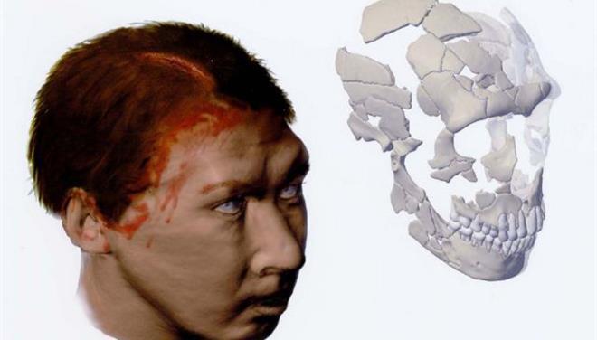 Οι επιστήμονες χρησιμοποίησαν ηλεκτρονικές τεχνικές απεικόνισης -γεωμετρική μορφομετρία- για να συγκρίνουν κρανία συγχρόνων ανθρώπων και Νεάντερταλ, καθώς και κρανία 11 άλλων ειδών πρωτευόντων θηλαστικών.
