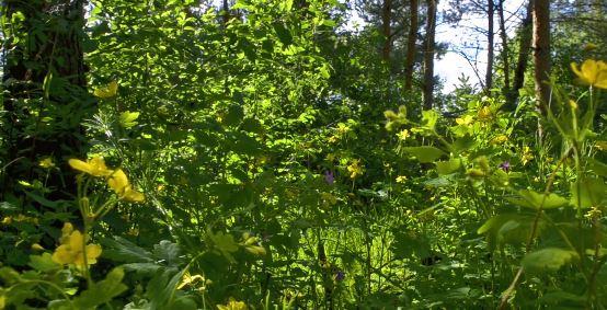 Η μυστική ζωή των φυτών, ένα υπέροχο time-lapse βίντεο να δείτε και να μοιραστείτε με όσους αγαπάτε !